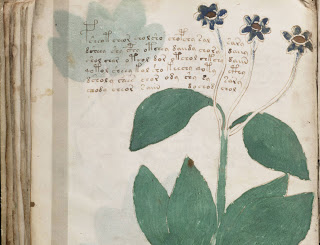 Dan Brown-like Plot Emerges from Mysterious Voynich Text