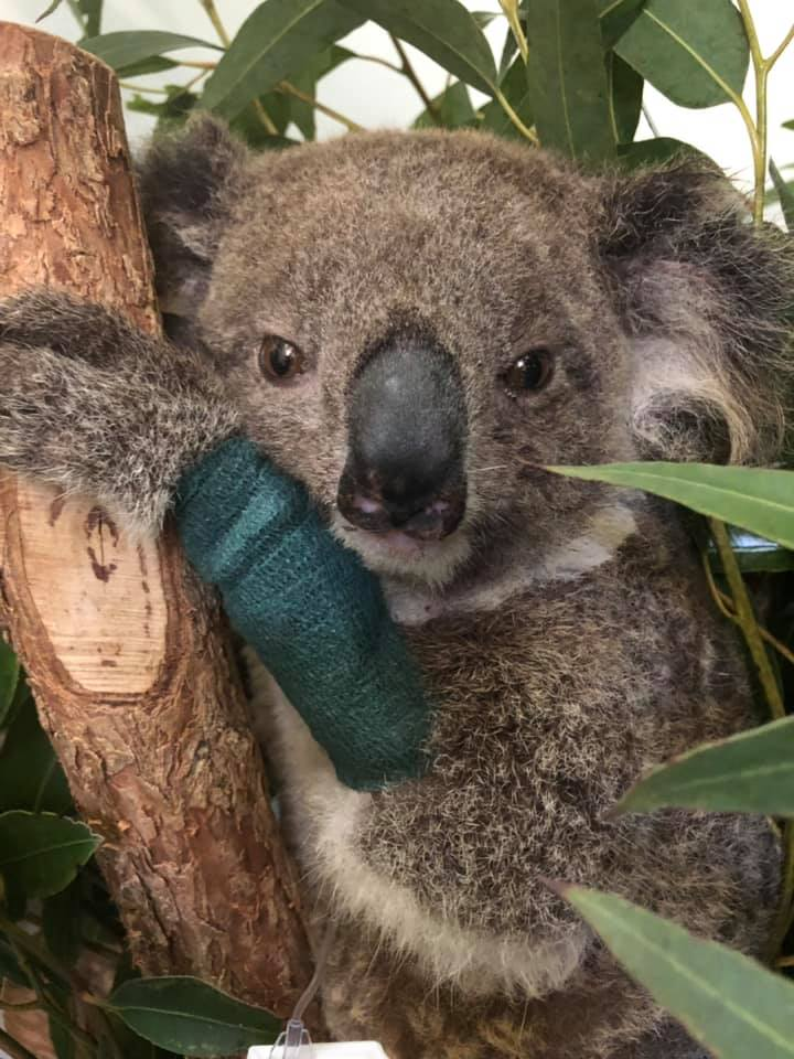 Organizations Respond to Australian Brushfire and Wildlife Crisis