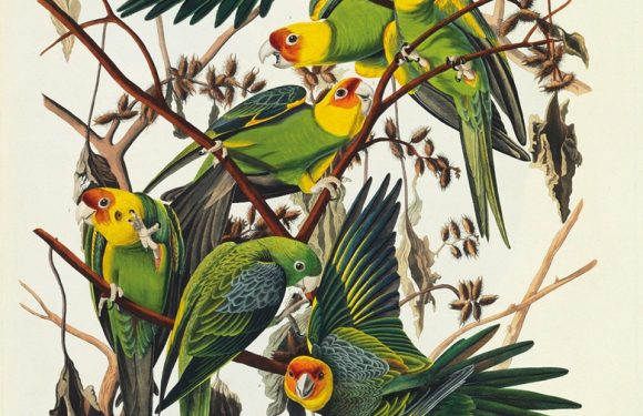 <i>Birds of America</i>  to Auction